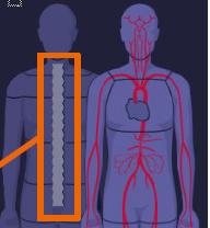 CT Osteo Somaris X